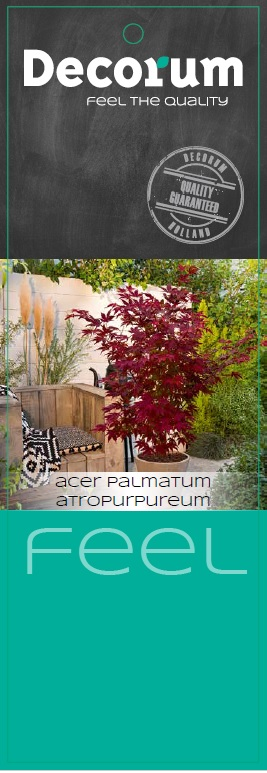 acer-decorum-feel